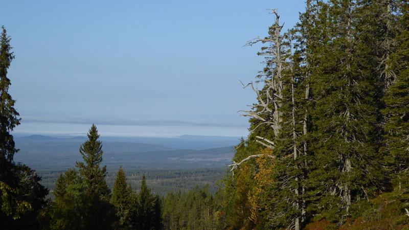Utsikt-dalarnas-langsta-idr